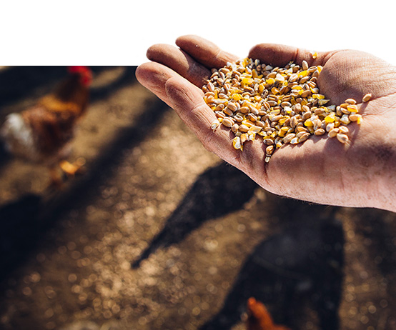 Terra Ingredients Organic Poultry Feed Ingredients